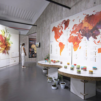 """NEW ITINERANCY EXHIBITION DESIGN """"SPICES. THE UNIVERSE OF FLAVOUR"""" TO IBI"""