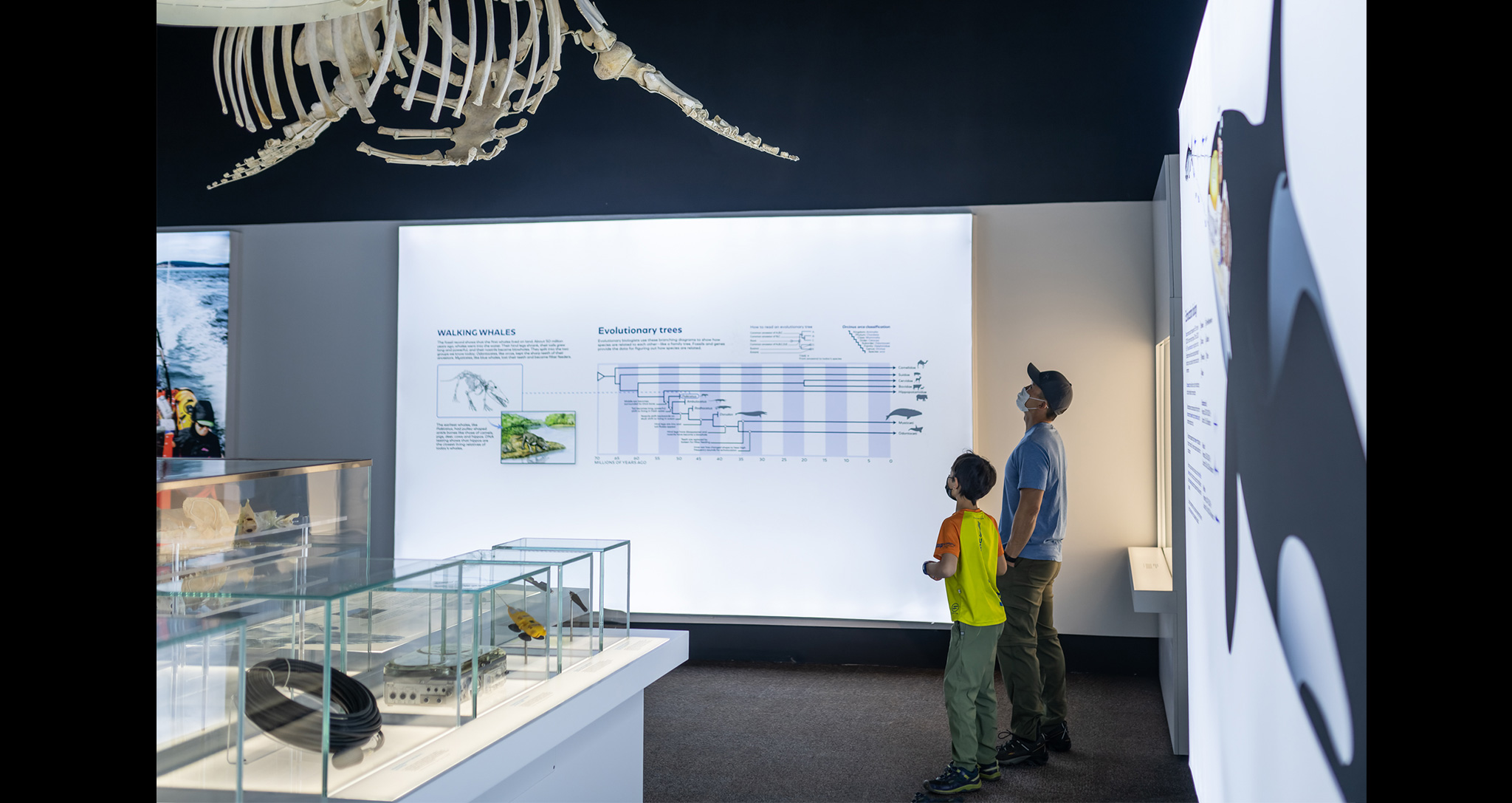 Orcas: Our Shared Future exhibition